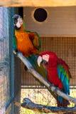 Papegojor i en bur Arkivfoto