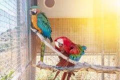 Papegojor i en bur Royaltyfria Foton