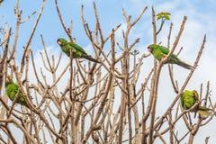 Papegojor i en tree Fotografering för Bildbyråer