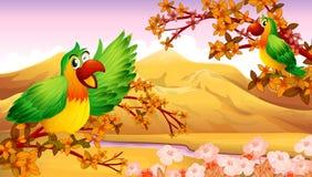 Papegojor i ett höstlandskap Royaltyfri Foto