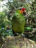 Papegojor i xcaret royaltyfri foto