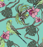 papegojor mönsan seamless Arkivfoton