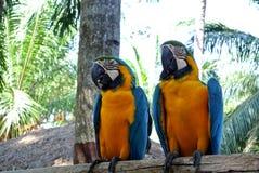Papegojor med olika tecken Royaltyfria Bilder