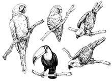 Papegojor och tukan skissar Royaltyfri Fotografi