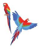 papegojor också vektor för coreldrawillustration royaltyfri illustrationer