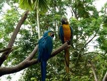 Papegojor på en filial Royaltyfria Bilder