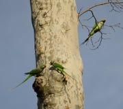 Papegojor på en tree Royaltyfria Bilder