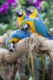 Papegojor seatting på filialen Arkivbild