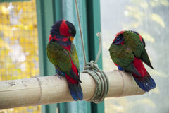 papegojor två royaltyfri bild