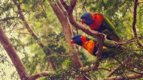 Papegojorna Royaltyfri Fotografi