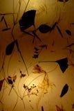 Papel amarelo velho com luz do fundo Fotografia de Stock