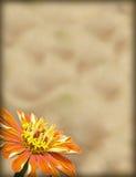 Papel con la frontera de la flor Foto de archivo libre de regalías