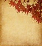 Papel con las hojas de otoño rojas Fotos de archivo
