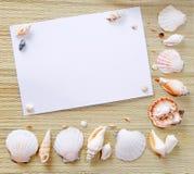 Papel con los seashells Imágenes de archivo libres de regalías