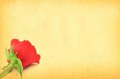 Papel con motivo color de rosa Fotografía de archivo libre de regalías