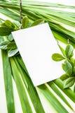 Papel de escribir en blanco con la decoración de las plantas verdes Fotos de archivo libres de regalías