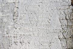 Papel de fundo natural da textura da casca de vidoeiro Fotografia de Stock