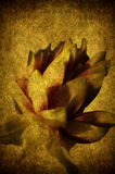 Papel de la flor Fotos de archivo
