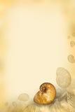 Papel de la vendimia con el shell Foto de archivo libre de regalías