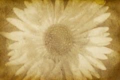 Papel de la vendimia con la impresión de la flor Foto de archivo libre de regalías