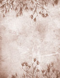 Papel de la vendimia de la magnolia Fotos de archivo