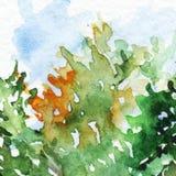 Papel de parede azul alaranjado do fundo da textura do verde do ramo da folha da árvore Fotografia de Stock Royalty Free