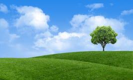Papel de parede cênico da opinião da paisagem verde do verão Árvore solitário no monte gramíneo e no céu azul com nuvens primaver fotos de stock