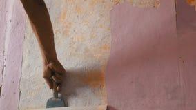 Papel de parede cor-de-rosa decr?pito em uma parede, reparo da casa Homem que descasca o papel de parede velho com esp?tula espec filme