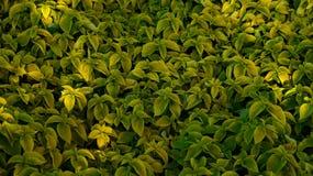 Papel de parede da grama verde Foto de Stock Royalty Free