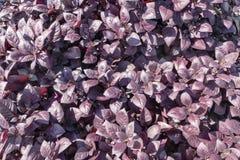 Papel de parede da natureza, fundo floral, cartões Fotos de Stock