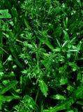 Papel de parede da planta verde Imagens de Stock Royalty Free