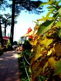 Papel de parede das folhas de outono para o fundo móvel imagem de stock