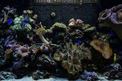 Papel de parede do aquário imagem de stock