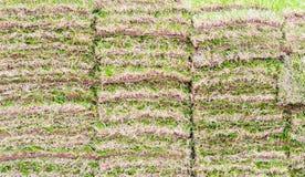 Papel de parede do fundo - pilhas de grama verde fresca em um parque imagem de stock royalty free