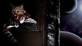 Papel de parede do gato do espaço imagem de stock royalty free