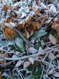 Papel de parede do inverno Fotos de Stock