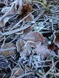 Papel de parede do inverno Fotos de Stock Royalty Free