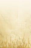Papel de parede do milho Fotografia de Stock