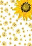 Papel de parede floral Foto de Stock Royalty Free