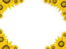 Papel de parede floral Foto de Stock