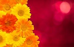 Papel de parede floral bonito Fotos de Stock