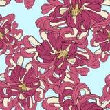 Papel de parede floral do vetor sem emenda Teste padrão decorativo do vintage no estilo clássico com chrysantemum das flores Tom  fotografia de stock