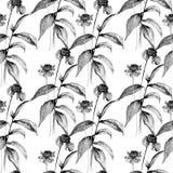Papel de parede sem emenda monocromático com as flores do Gerbera do verão ilustração stock