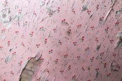 Papel de parede velho do rosa da casca Fotos de Stock