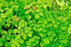 Papel de parede verde Fotografia de Stock