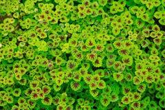 Papel de parede verde Fotos de Stock Royalty Free