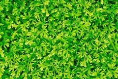 Papel de parede verde Fotos de Stock