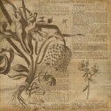 Papel del collage del fondo del vintage - ejemplo botánico - papel de Digitaces del collage de la horticultura libre illustration