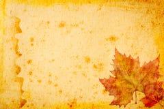 Papel del grunge de las hojas de arce para el fondo Fotos de archivo libres de regalías