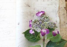 Papel del vintage con la hortensia fresca Imagen de archivo